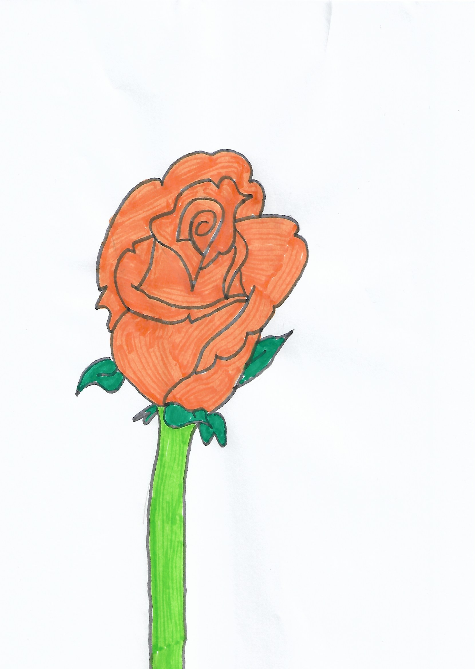Evan rosay